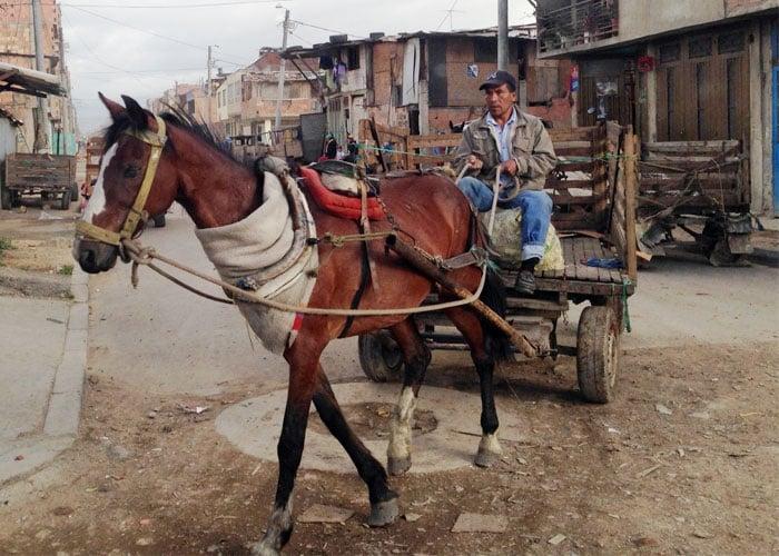 1658 caballos que ya no son maltratados en Bogotá