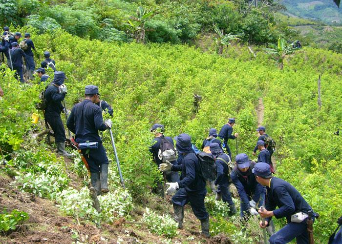 La sustitución de cultivos que proponen los campesinos del Catatumbo