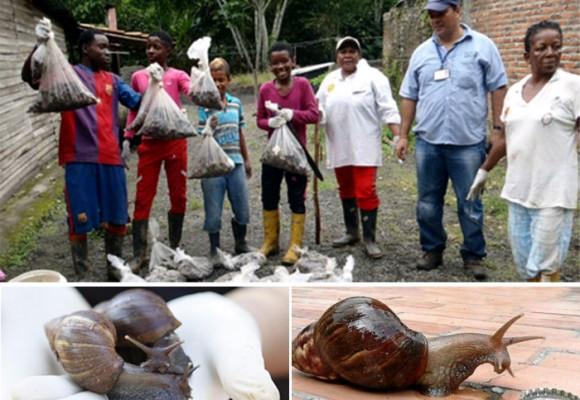 La plaga que amenaza a Barranquilla