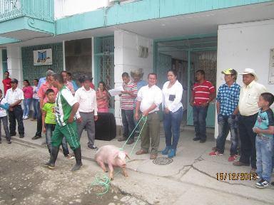 En Argelia con cerdos callaron inconformidades entre alcaldesa y aomunidad