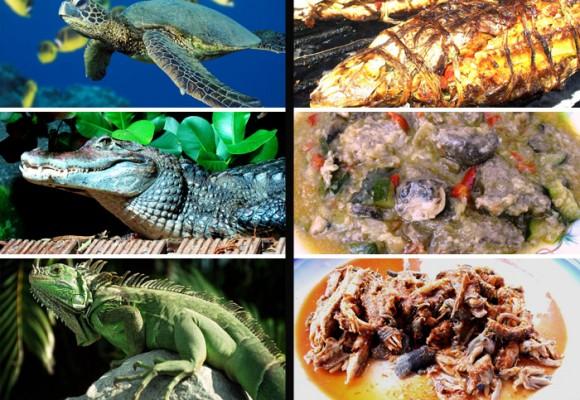 Comer animales en vía de extinción: extraño gusto colombiano