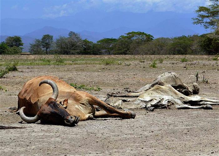 Además de los chigüiros, otros animales mueren