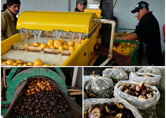 El bulto de papa nativa cuesta 120 mil pesos, más caro que el de sabanera o la pastusa que no sobrepasan los 90 mil pesos.