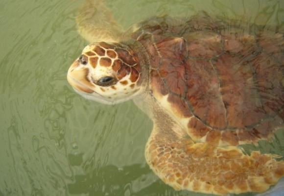 Hoy el s.o.s lo hacemos por la  fauna Guajira