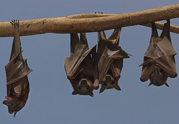 Efecto murciélago en Colombia