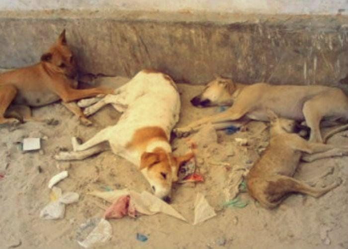 Animalistas protestan en Santa Marta