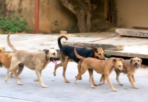 """""""Limpieza"""" de perros callejeros en Buenaventura"""