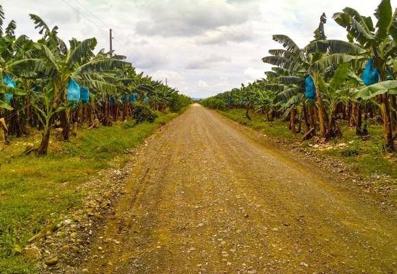 Bananeras y narrativas comunistas