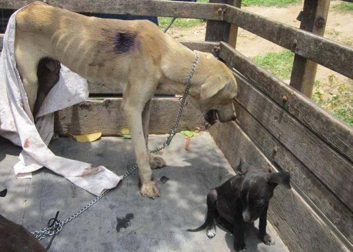 La mala suerte de los perros callejeros en Santa Marta