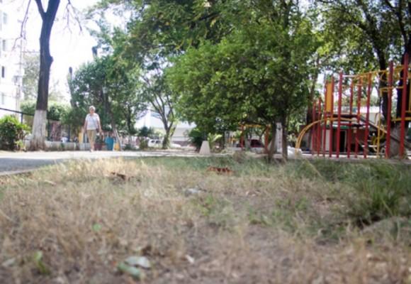 Los parques de Cúcuta se están muriendo de sed