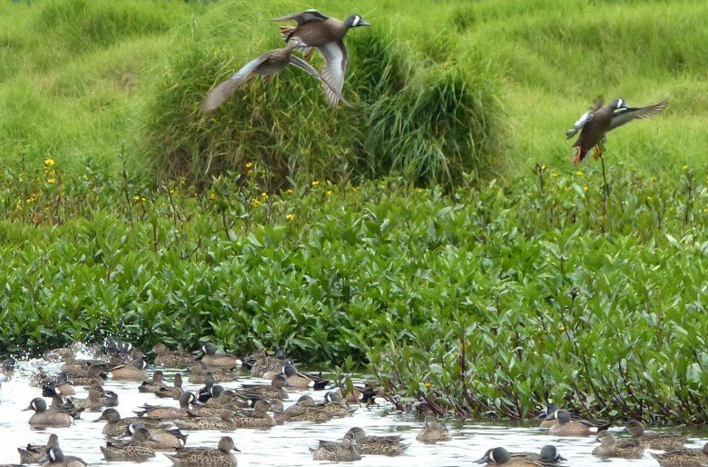 ¿Recuperar el río Bogotá implica destruir un humedal?