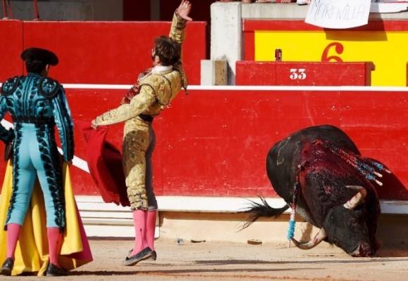 Consulta por los toros ¿2016?