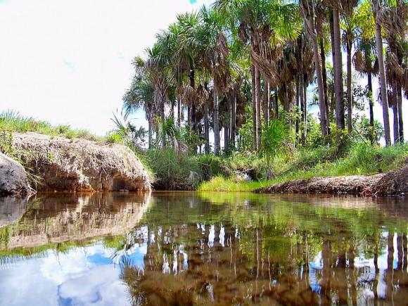 Los morichales son ecosistemas muy importantes para el ciclo del agua y la estabilidad del clima.   Foto: UNAL