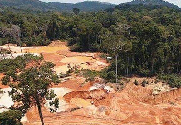Avanza en Colombia REDD+ para combatir el cambio climático