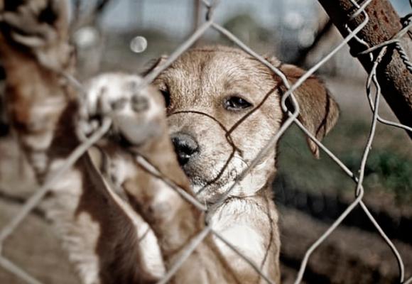 Por una política pública animalista