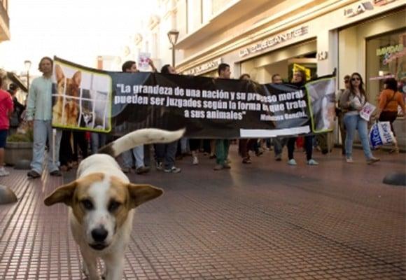 """Una sociedad animalista """"a medias"""""""
