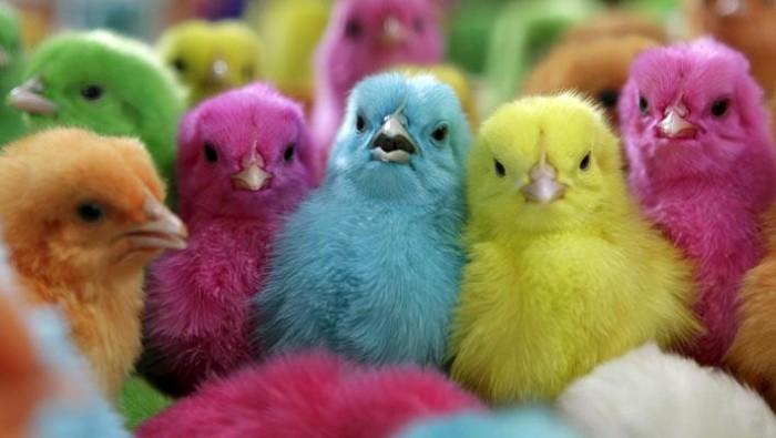 pollos-serie