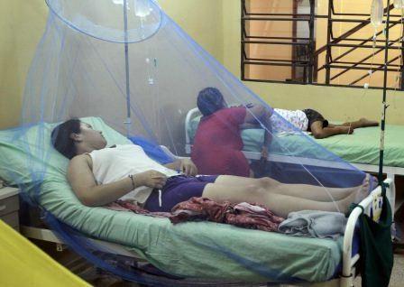 Todo sobre el chikungunya