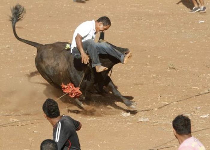 Las otras formas de barbarie humana contra los animales