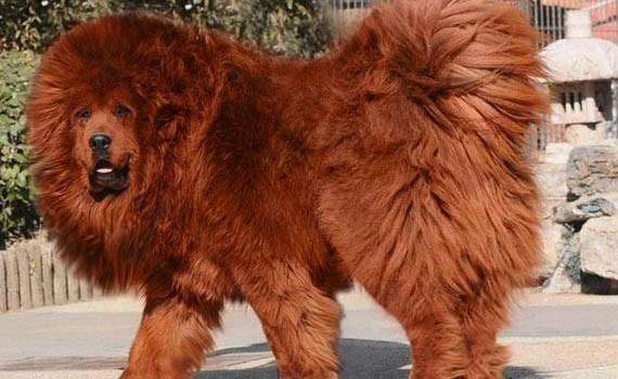 Las mascotas más caras del mundo