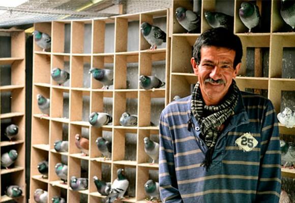 Un refugio de palomas mensajeras en Bogotá