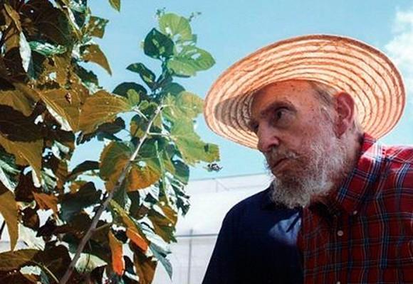 La hierba que mantuvo vivo hasta los 90 años a Fidel Castro