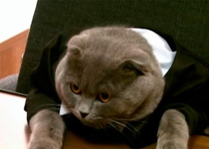 El gato que se convirtió en gerente