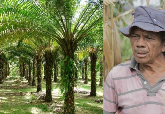 El paisaje cambió: Palma y más palma