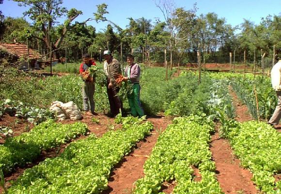 El panorama del campo tras la Misión Rural y el Censo Nacional Agropecuario