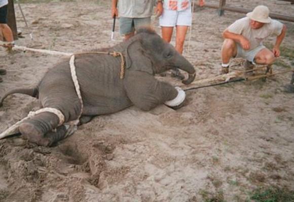 'La crueldad hacia los animales sobrepasa los límites de la racionalidad humana'
