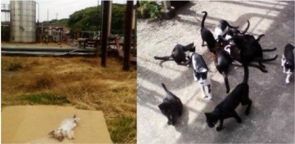 Los  gatos que obligarían el cierre de la Industria de Licores del Valle