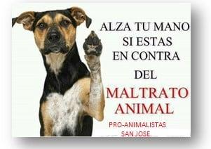 """""""Por favor no me maltrates"""": dicen los perritos en el Norte de Antioquia"""
