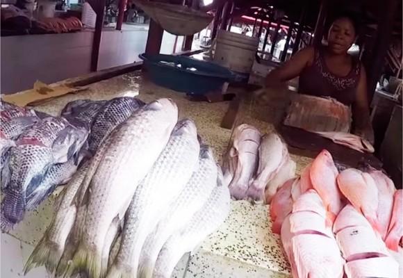 Ellos viven de vender pescado