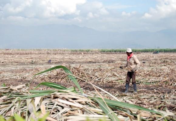 """""""Presidente, no somos un cartel"""": azucareros del Valle"""