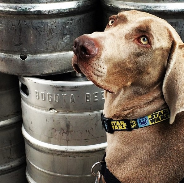 Obi en Bogotá Beer Company