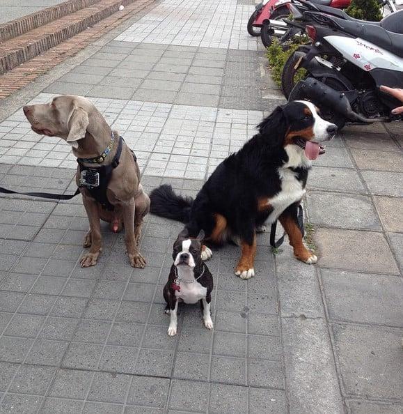 Obi y otros perros en La Bagatelle