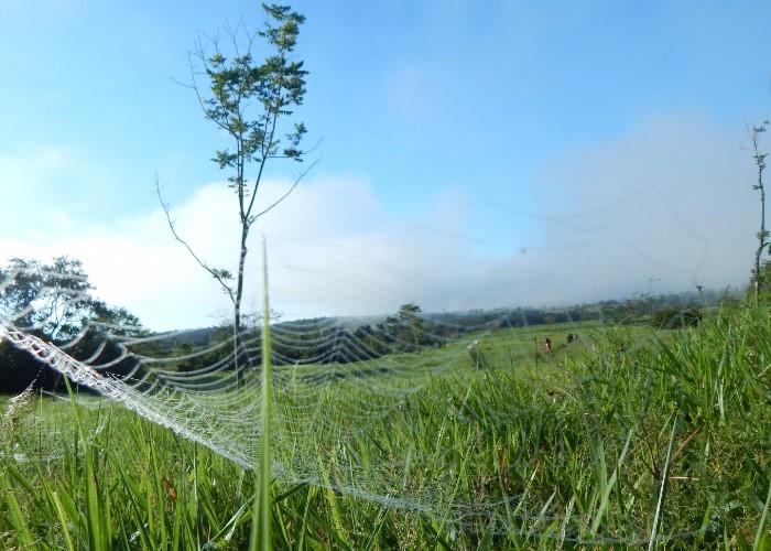 Una huída de 16 años en las selvas del Caquetá