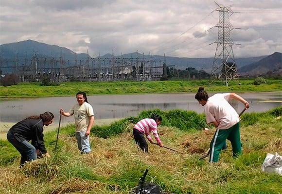 Humedal La Libélula de Tunjuelito: un remanso verde en plena Bogotá