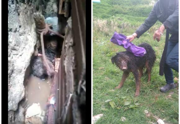 En video: el impactante rescate de un perro por los Bomberos de Bogotá