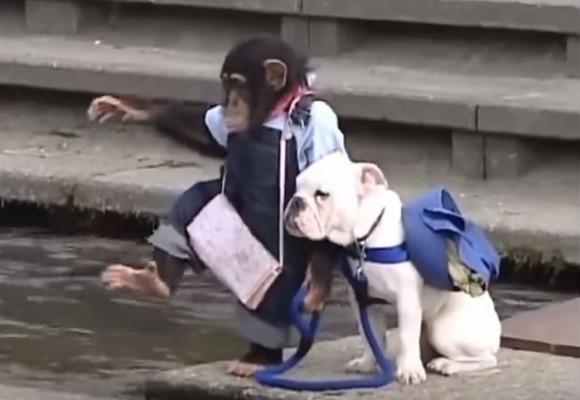 En video: el chimpancé que trata de cruzar un lago con su perro mascota