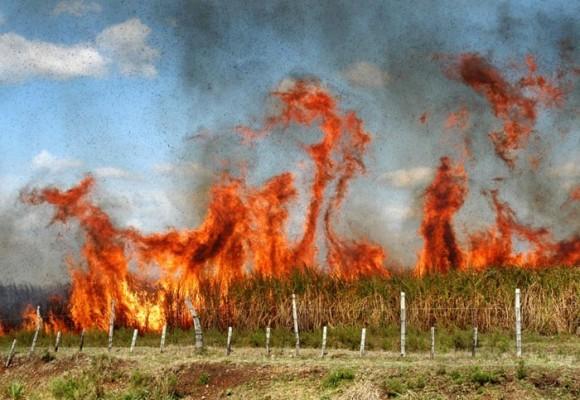 Ingenios siguen quemando cultivos en el Valle a pesar de prohibición
