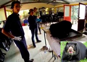 ¿Falso positivo en la muerte del oso de anteojos?
