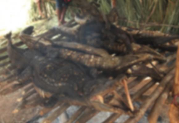 Festival en Puerto Gaitán ¿Tradición gastronómica o crimen ambiental?