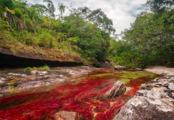 Falsos ambientalistas en el tema Caño Cristales