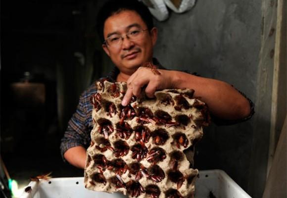 El meganegocio de las cucarachas convertidas en comida en China