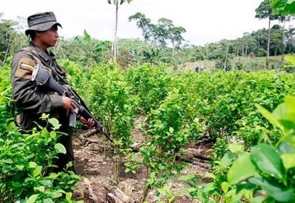 Las FARC invitan a erradicar cultivos de coca en Putumayo