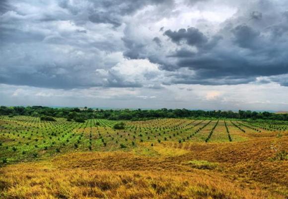 Las tierras y el poder en Colombia