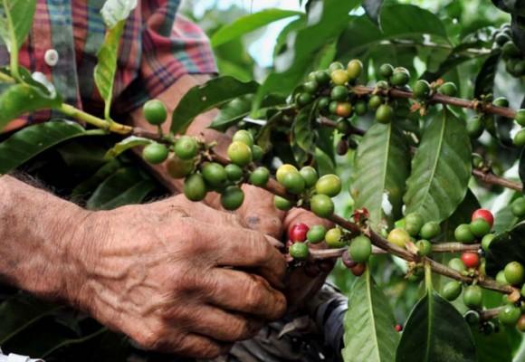 De cafeteros a productores agropecuarios