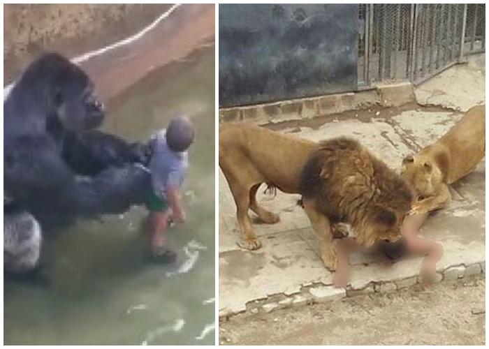 El infortunio animalista en la muerte de los leones y el gorila
