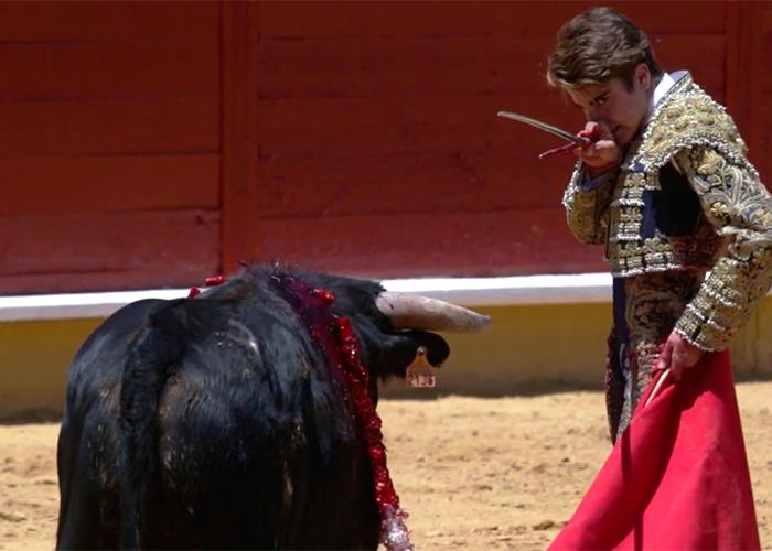 Video: La tortura que recibe un toro en las escuelas taurinas